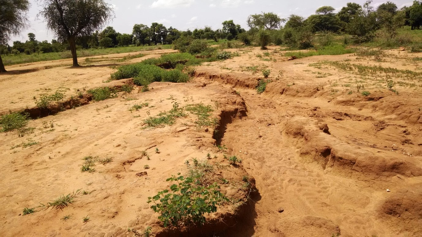 Gullies such as this are common features of the local landscape.
