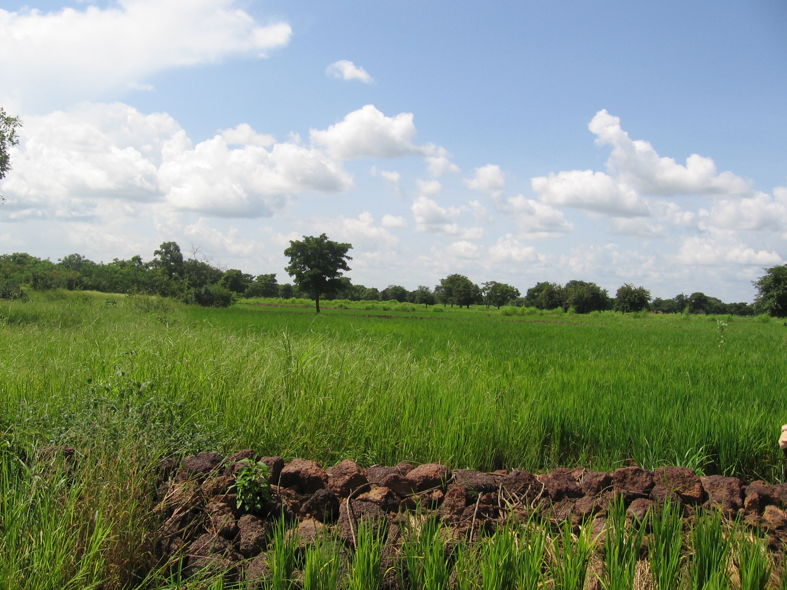 Permeable rock dam and rice fields in Burkina Faso - Photo by Brent Simpson